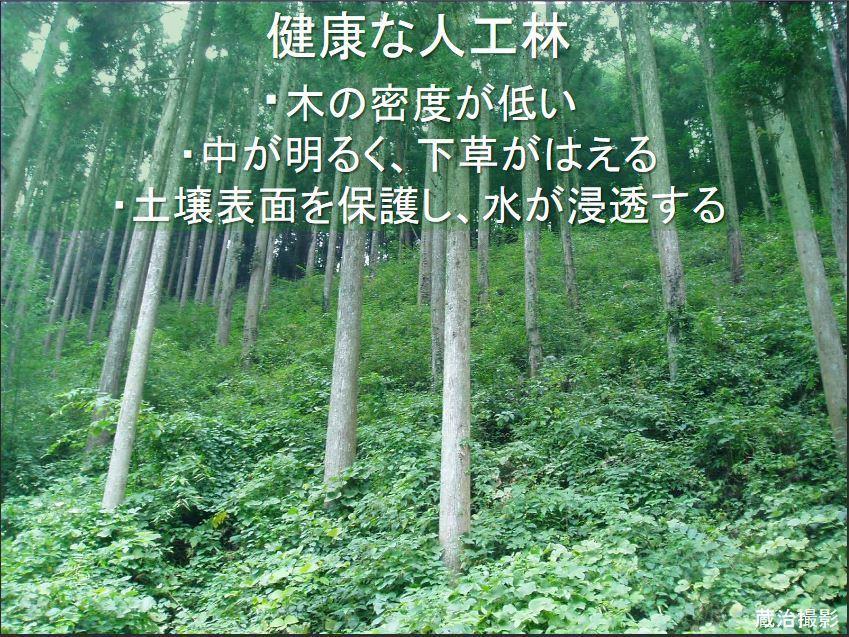 健全な人工林